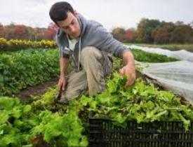Diploma in Agriculture Online Course