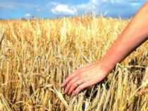 Post Graduate Diploma in Rural Management, PGDRM Online course