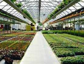 Online Course Diploma in Horticulture