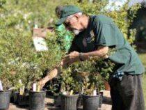 Online Courses Certificate in Gardener