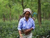 Online Courses Certificate in Tea plantation worker
