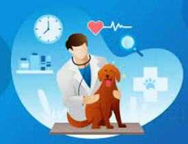 Online Course diploma in veterinary