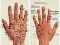 Online Courses Master Diploma in Sujok Acupressure Therapy
